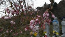 桜開花六地蔵